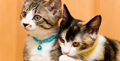 猫混合ワクチン