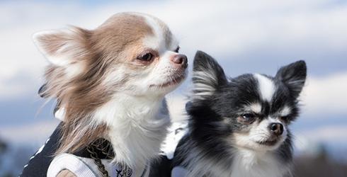 犬混合ワクチン